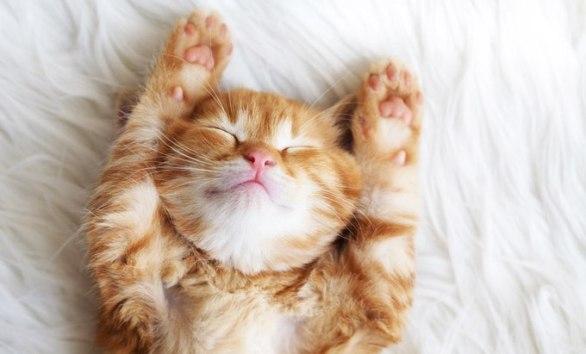 best-kitten-names-1